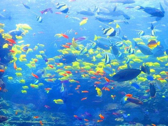 Georgia aquarium picture of georgia aquarium atlanta for Georgia freshwater fish
