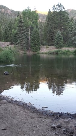 Bruce Spruce Ranch: Small pond down the road