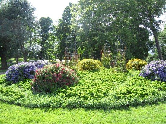 Kaivopuisto : 花壇のグリーンにはなぜかパセリも