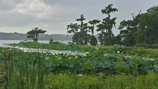 Lake Martin 2013