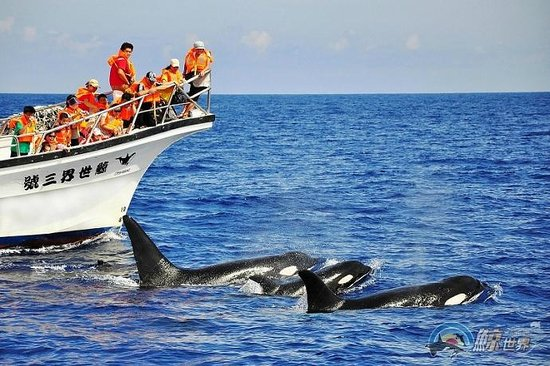 Whale Watching-Whale Watching Tour