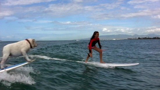Ty Gurney Surf School : Sharing a wave with Gracie, TGSS' surfing Bulldog