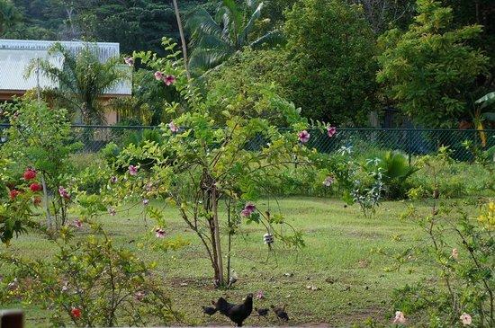 Paodise Guesthouse: Garten
