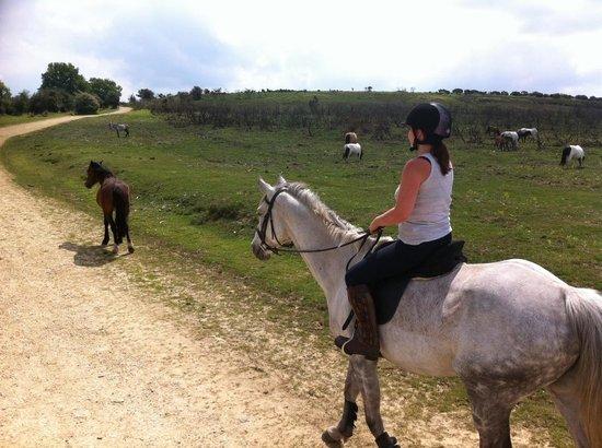Arniss Equestrian