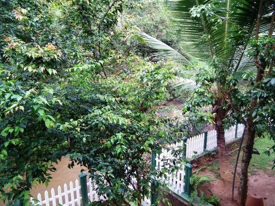 Kandy Guest House: Giardino e ingresso al fiume