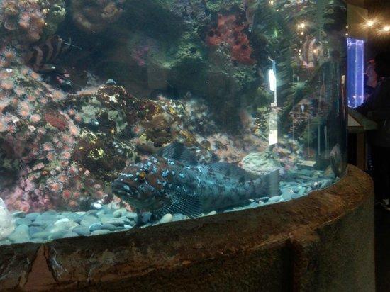 Marine Tunnel Aquarium Of The Bay Picture Of Aquarium