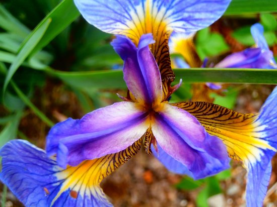 Cally Gardens: My goodness me !