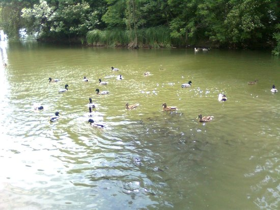 Parcul Alexandru Ioan Cuza: You can bring bread with you to feed the ducks