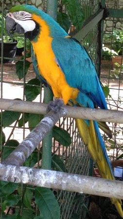 Sandy Point Village: Hotelvogel Nadine oder Gregor wie wir ihn nannten