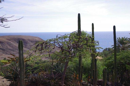 parken - Picture of Oasis Park Fuerteventura, Fuerteventura - TripAdvisor