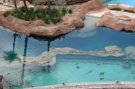 Atlantis, Beach Tower, Autograph Collection : View from our balcony