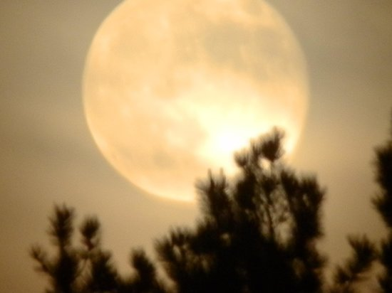 Spokane Creek Cabins & Campground: super moon rising!