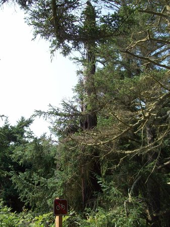 Fort Ebey State Park : Forest beauty