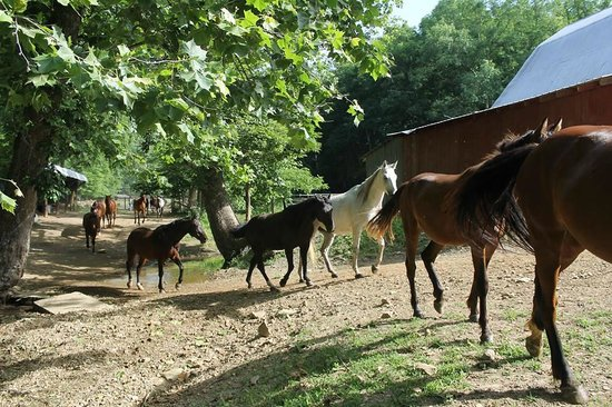 Schooner Valley Stables: A Beautiful Summer Morning