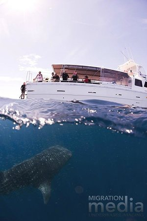 Ningaloo reef dive coral bay 2018 all you need to know before you go with photos tripadvisor - Ningaloo reef dive ...