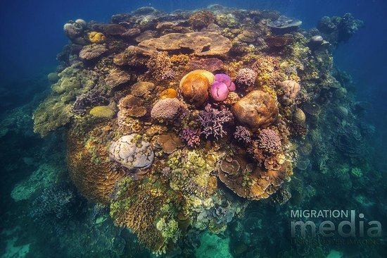 Dive site coral bay on the ningaloo reef bild von ningaloo reef dive coral bay tripadvisor - Ningaloo reef dive ...