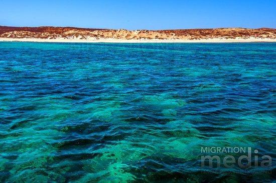 Hard coral gardens ningaloo reef coral bay western - Ningaloo reef dive ...