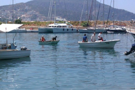 Limos Restaurant Kalkan: View from Lipsos restaurant, there are actually 3 goats aboard the little boat