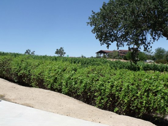 Wine Country RV Resort: View of vineyard from deluxe space