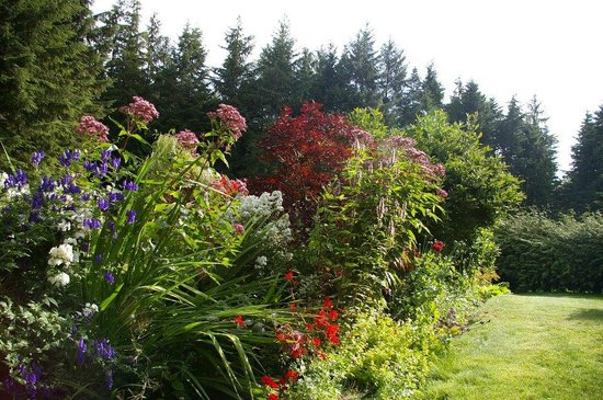 Nimpkish Forest B&B : Bed and Breakfast Summer Flowers