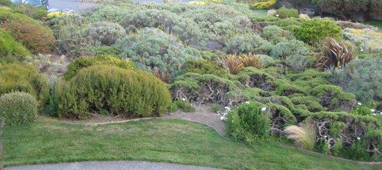 Bodega Bay Lodge: Closeup of landscaping
