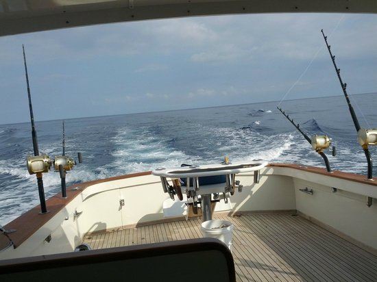 Words cannot describe this awesome experience review of for Kona fishing charters