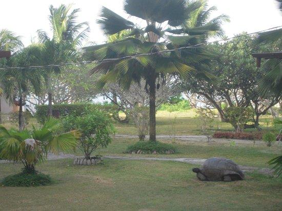 New Emerald Cove: il giardino del NEC