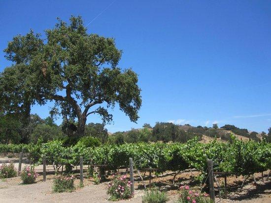 Captain Jack's Santa Barbara Tours: Fess Parker!