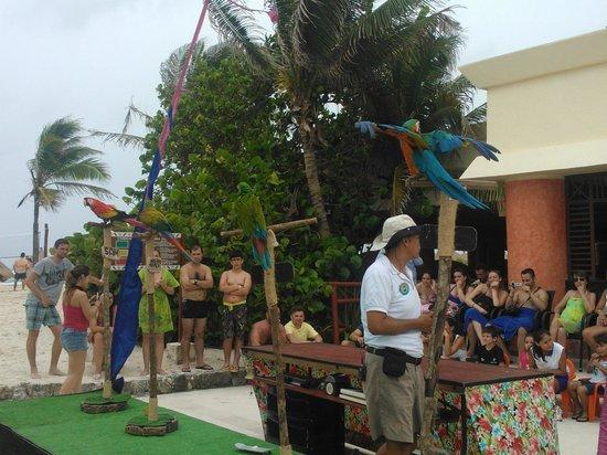 Grand Bahia Principe Coba: Show aves