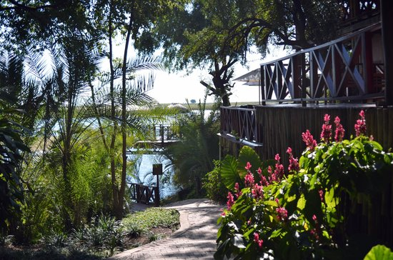 Chobe Marina Lodge: Vers la rivière