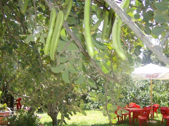 Agriturismo Calamosche: sotto le piante