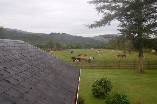 Salmon Leap Farm: View from our room.