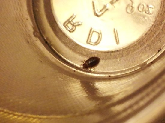 Comfort Inn Lakeside: Bed Bug found on my pillow