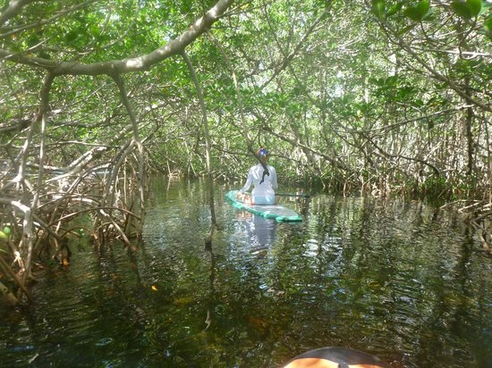 SUP Key West: Navigating through the mangroves
