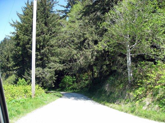 Radar Station B-71 : Coastal Drive, gravel road to radar station