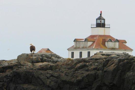 Islander Puffins, Seabirds & Lighthouses Tour: Eagle and Egg Rock Light © 2013 Ted Denman