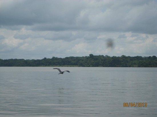 Gamboa Rainforest Resort Monkey Island Tour: Bird