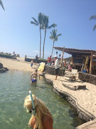 Four Seasons Resort Hualalai: KIngs Pond> where you can swim with the fish!