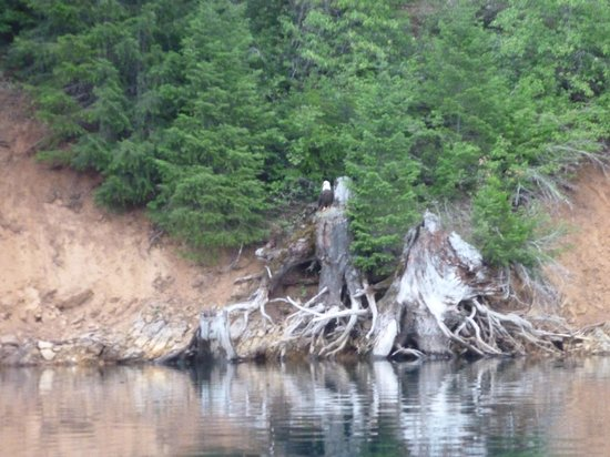 McCloud Outdoors: Eagle on the water's edge