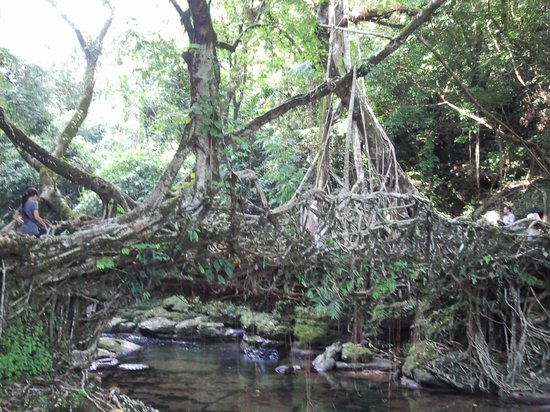 Mawlynnong Waterfall: The Root Bridges near Mawlynnong village, Shillong, India
