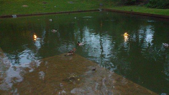 Cristina Enea Park : Lago