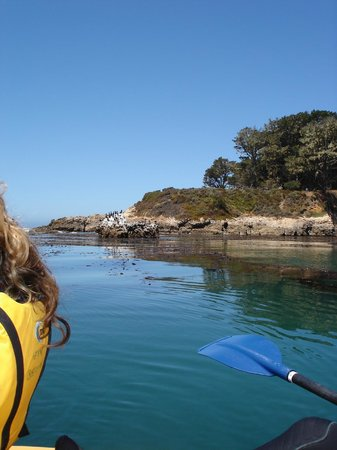 Kayak Outfitters: The cliff that provides protection for San Simeon Cove