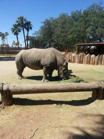 Wildlife World Zoo and Aquarium: rhino
