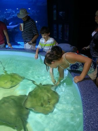‪‪Wildlife World Zoo and Aquarium‬: petting sting ray‬