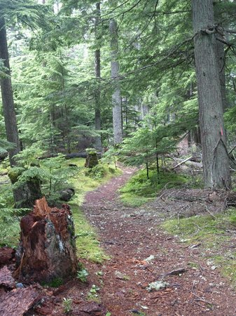 Squamish Lil'wat Cultural Centre: Surrounding nature trail