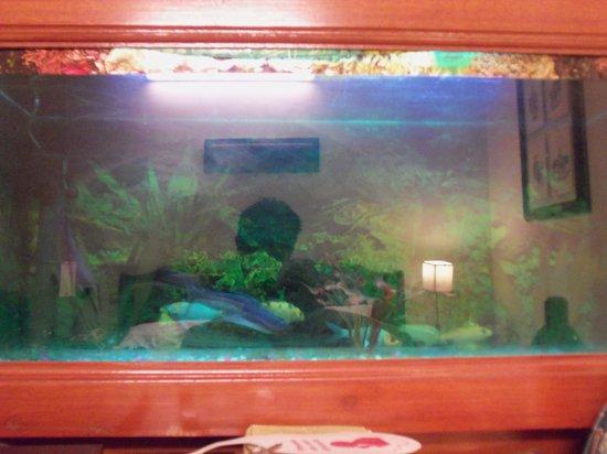 โรงแรมฮารี พิออร์โก: Aquarium