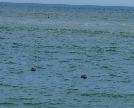 Cape Cod National Seashore: Seals