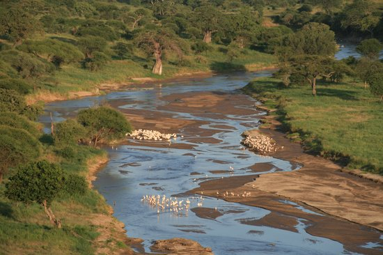 Tarangire Safari Lodge: Tarangire river with storks