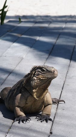 Sunset Cove: Lionel the Iguana