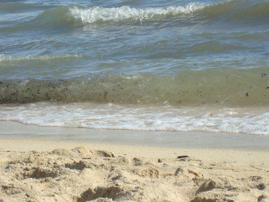 Balear : recht sauberer strand